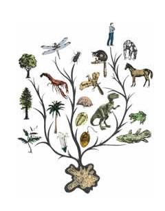 진화.jpg