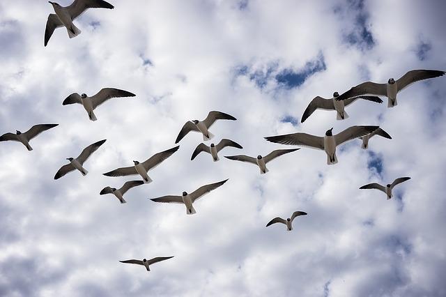 birds-1216039_640.jpg